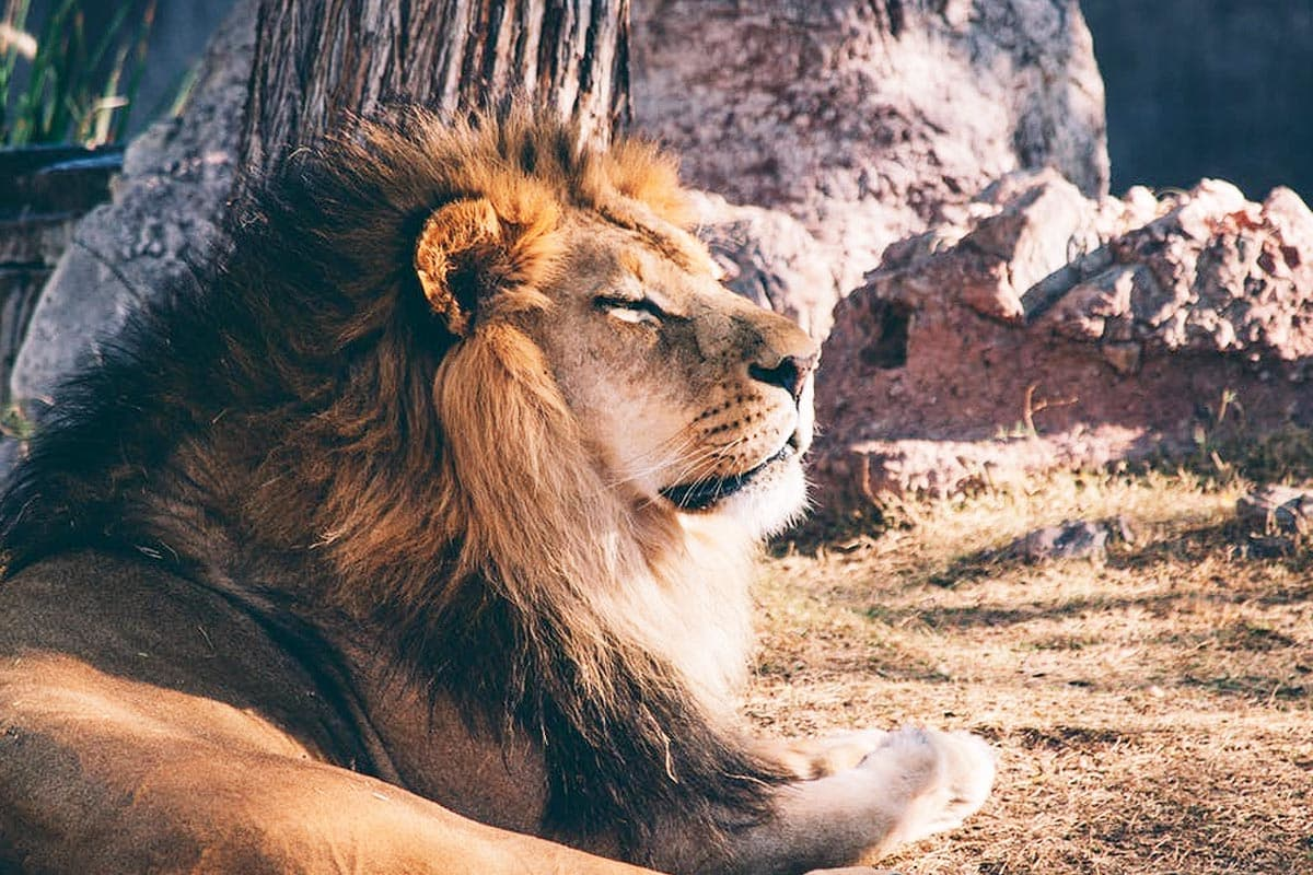 Why Content Can't Always Be King in Your B2B Marketing